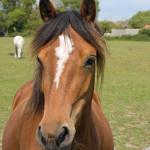 horse-portriat
